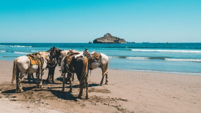 Canadian snowbirds can enjoy horseback riding on the beach in Mazatlan, Mexico